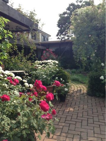 7月12日撮影。栗の里ローズガーデン夏バラが見頃!