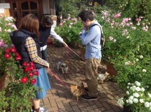 散策スペース有、ワンちゃん以外のペットも大歓迎!