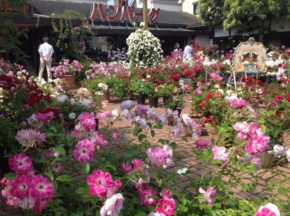 """100種600株のバラが定植される観光オープンガーデン内で、 主に""""オールドローズ""""と言われる古き良きバラを鑑賞という手法で、 3世代家族へ発信(ペット入場可)。"""