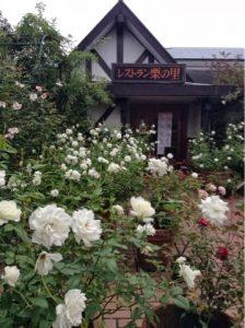 10月15日撮影 秋バラ見頃を迎えてます。