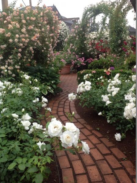 レインガーデンを散策し、バラのある風景をお楽しみください♪