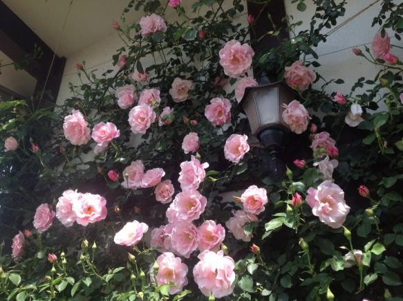 外壁に仕立て、ピンク色を引き立たせています♪