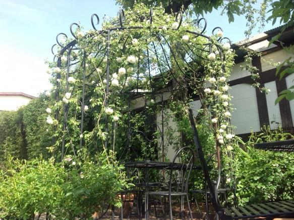 純白なバラが仕立てられた「ガゼホ」の下でお食事やティータイムをお楽しみください♪