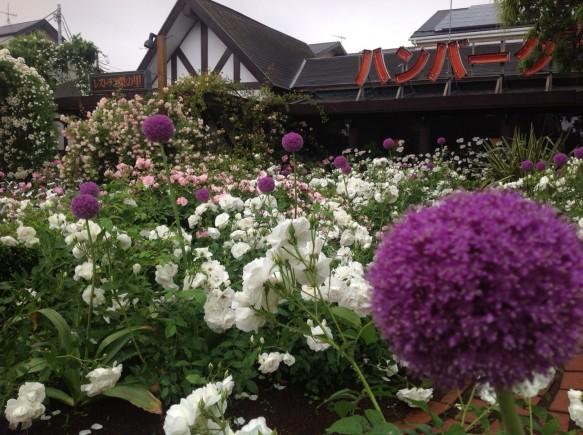 100種600株のバラが植栽されるガーデン