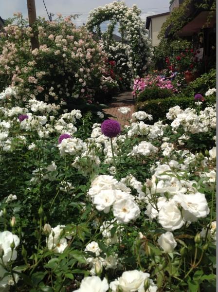 6月上旬まで、バラの香りを楽しめます♪
