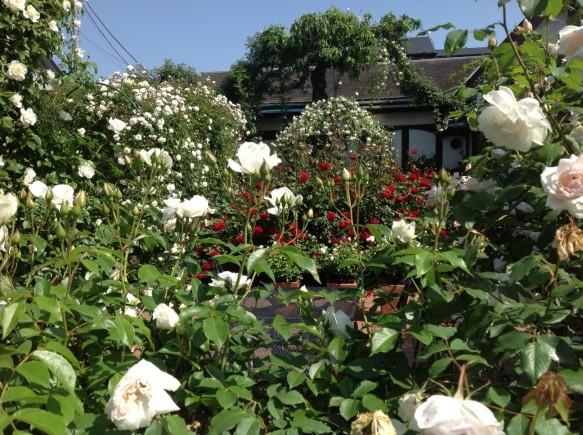バラとバラのコラボレーションをお楽しみください♪
