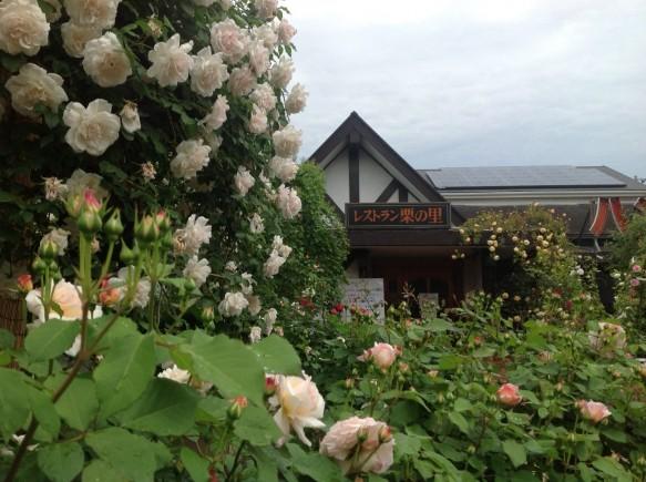 これからの時期が、バラ本番です♪ 神奈川県観光協会でも、バラの名所として紹介されていますので、ぜひ、一度、ご来場ください♪