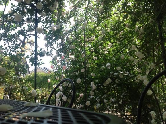 ガゼホやアーチの中からの眺めは、優雅で贅沢な一時です♪