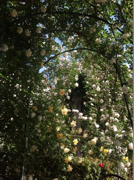 バラが仕立てられた「ガゼホ」の中での食事やティータイムは至福の時です♪