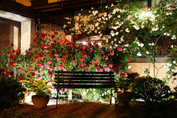 県内唯一の夏バラライトアップ♪ ランチ・ディナー時もガーデン内で、お食事可能です♪