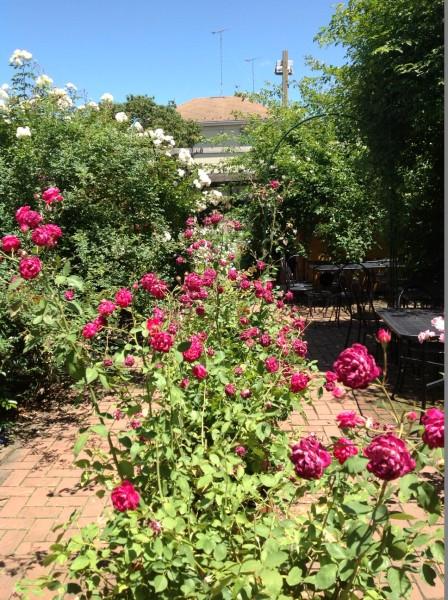 バラのお庭を散策♪