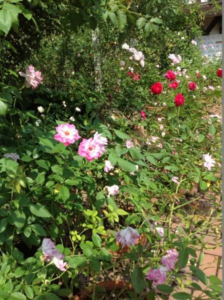 秋バラの香りを感じながら、ガーデン内でのお食事は、いかがでしょうか♪