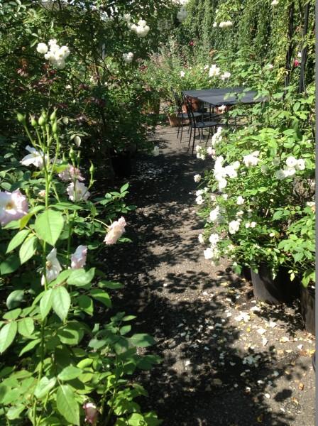 ガーデン内でお食事や喫茶も可能♪