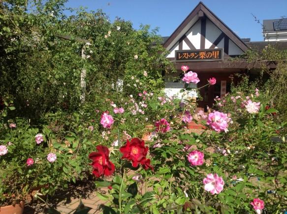 冬バラは、香り、色を楽しむ季節です♪