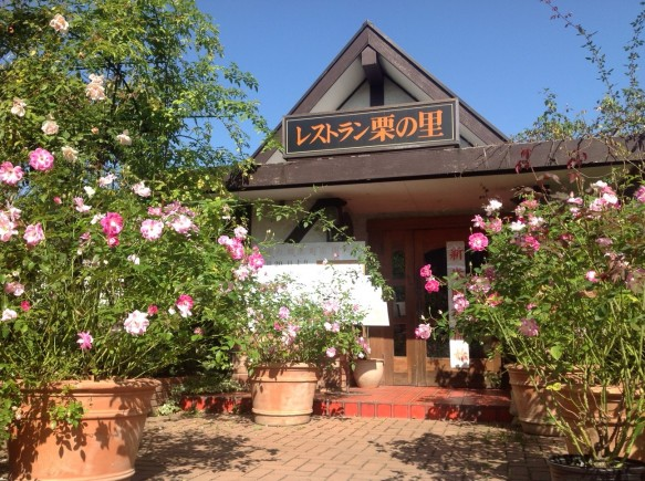 ピンクアイスバーグ等、60~65種350株~450株程度、開花しております♪