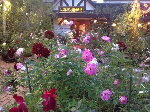 秋バラより、さらに色が鮮やかで、香りが豊かなのが特徴です♪