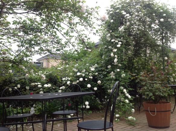 ランチタイム・カフェタイム・ディナータイムに、 バラのガゼボで優雅にお食事等、いかがでしょうか♪