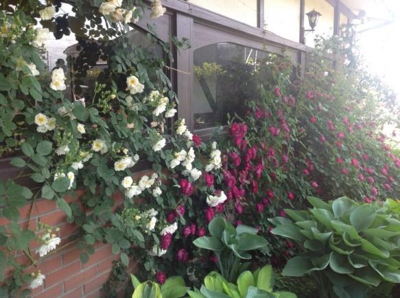 香り豊かな品種も数多く開花!!