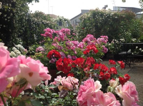 色鮮やかなバラのコラボレーション!