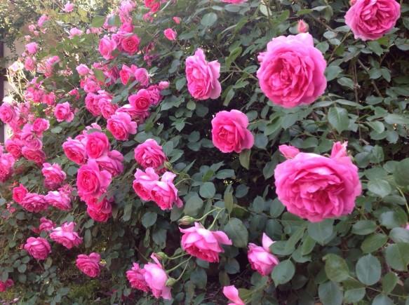 バラが咲く庭でランチ&ディナー♪