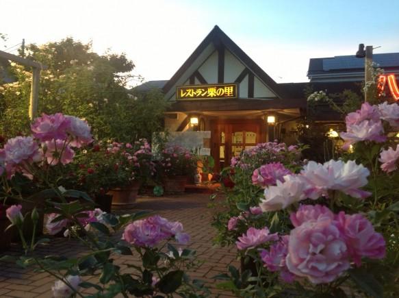 400本の夏バラが咲き誇ります! エリアによっては、春バラと変わらないクオリティーを楽しめます!