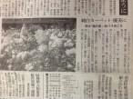 秋バラ「純白カーペット」見頃と掲載されました!