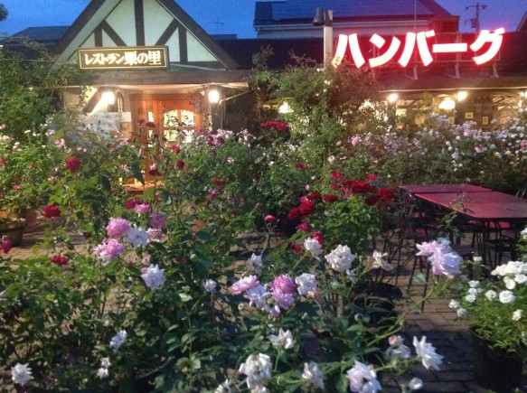 幻想的な世界!秋バラのライトアップ!