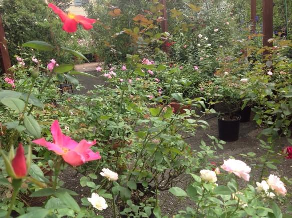 緑と花のグラデーション! 香りと色が鮮やかです!