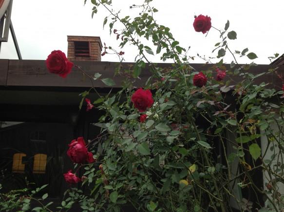 48年のレトロレストラン&貴賓高い赤バラ♪