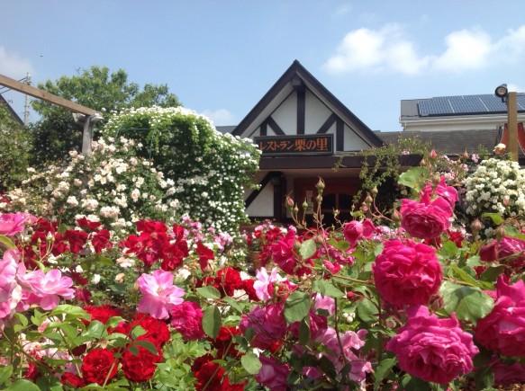 バラに囲まれるレストラン